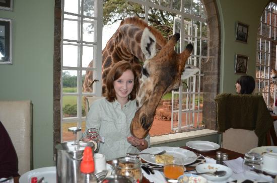 Breakfast With The Giraffes Picture Of Giraffe Manor
