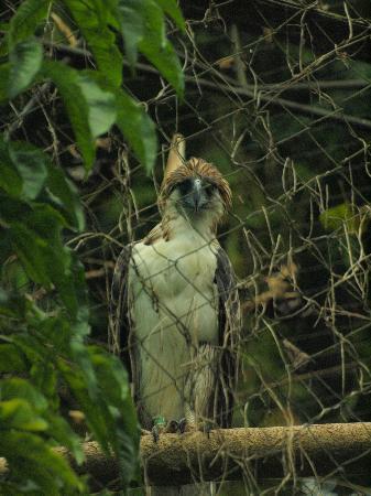 Philippine Eagle Centre 사진