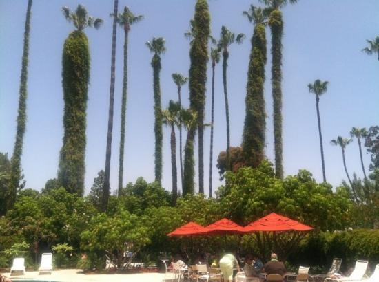 San Diego RV Resort : Pool Area Landscaping