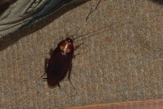 هوتل دسكفري إن: cockroach! 