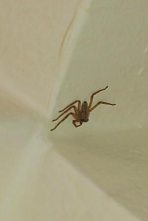 Hotel Discovery Inn : a spider in our rooom