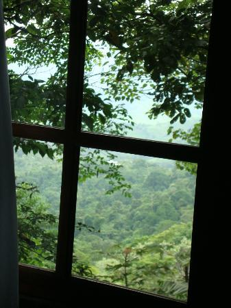 Rio Magnolia Nature Lodge: View from inside the Mongo Congo
