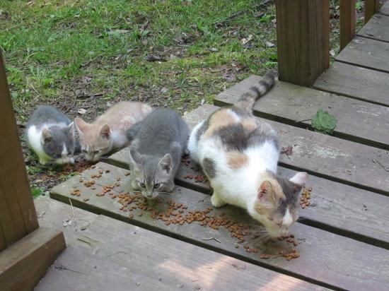 Getaway Cabins: Kittens!