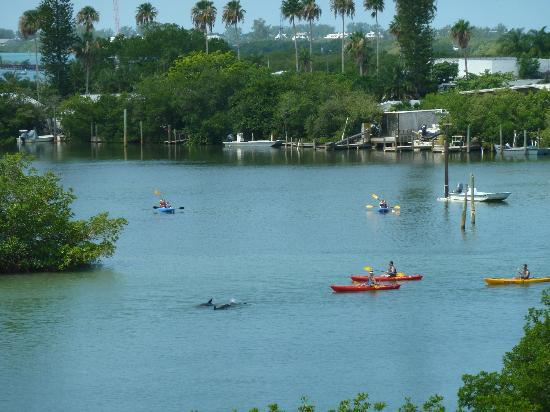 Grande Tours Kayak & Paddleboard Center: In Coral Creek as kayakers watch the dolphins