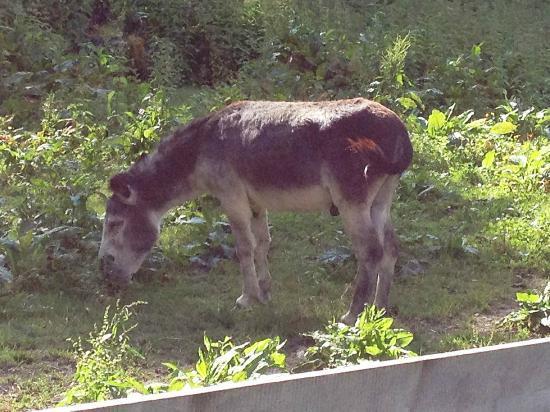 Hotel Stadt Wien: Streichelzoo - Carlos der Esel