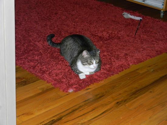 Chez Michelle: un des chats !