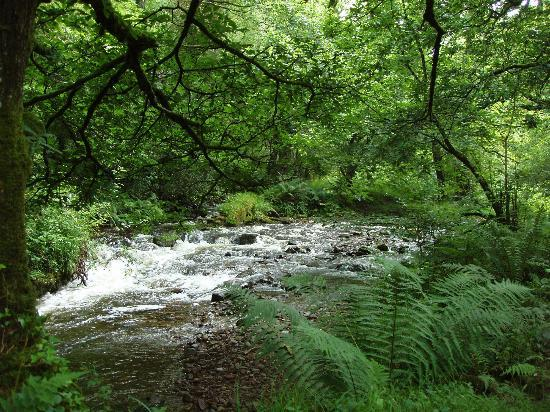 Horner Woods and Water - A Guided Walk