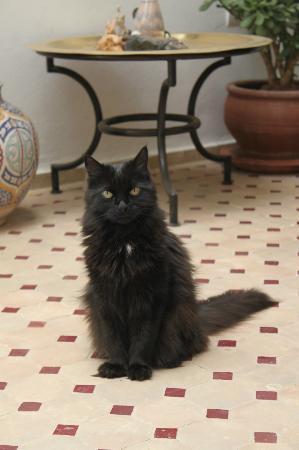 Riad Dar Zampa: Zampa le beau chat