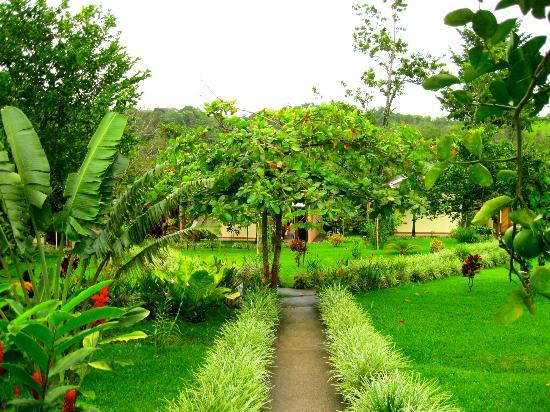 Tenorio Lodge: View of the grounds