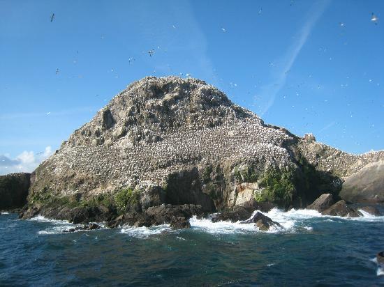 Armor Navigation : L'île aux oiseaux et ses fous
