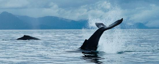 Wild Alaska Charters - Whale Watching Tours