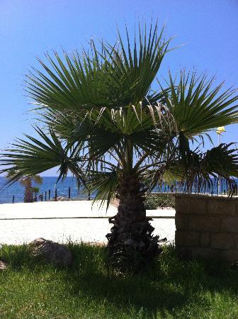 Akti Beach Village Resort : The outdoors