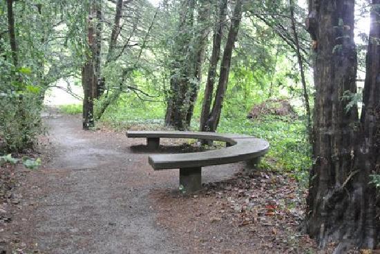 Botanical Garden (Botanischer Garten): Botanical Gardens woods