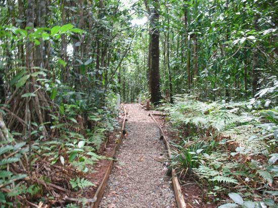 Suva, Fiyi: Path to Lower Pools