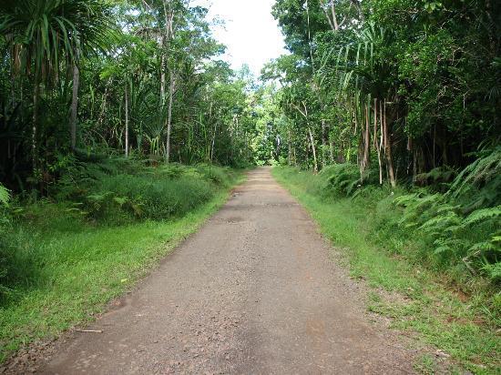 Colo-I-Suva Forest Park: Road into Park