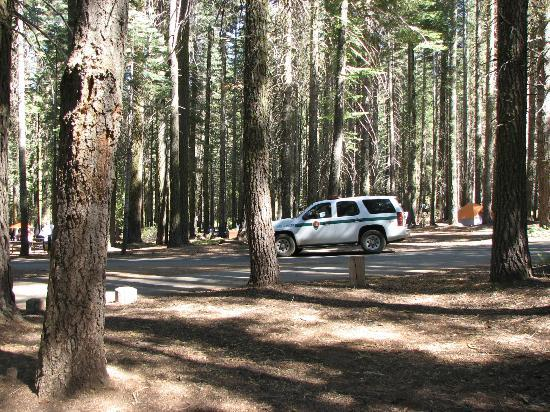 Crane Flat Campground: Rangers always checking campgrounds