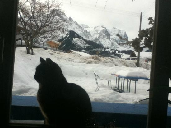 Gasthof zum Ritter Stuebli: Friendly Cat in Restaurant Window