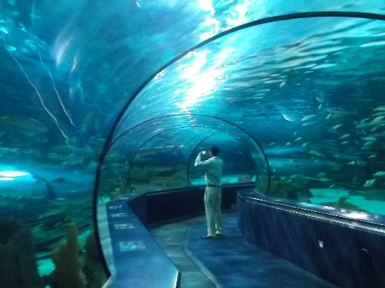 In The Underwater Tunnel Picture Of Ripley S Aquarium Myrtle Beach Tripadvisor