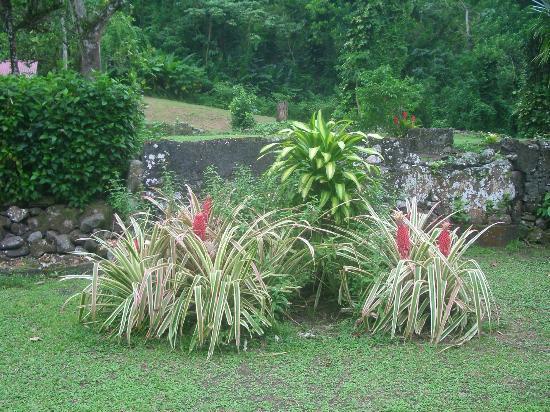 Habitation Anse-Couleuvre: fleurs du jardin