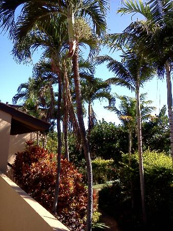 Wailea Ekahi Village: View from Patio