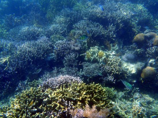 Coron Bay: Coral reef garden