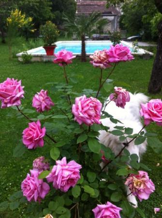 Les Logis de Lestiac: la piscine