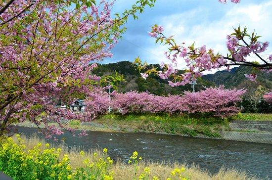 Kawazu-cho, Japón:                   葉っぱが多いです