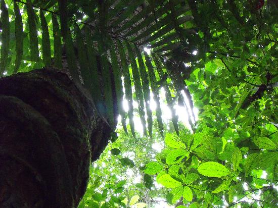 Manaus Botanical Garden - MUSA: On the botanic garden trails