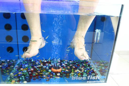 Kittlas bara lite bild fr n dr fish spa rethymnon for Fish pedicure utah
