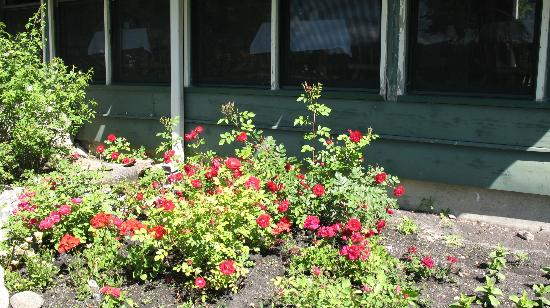 Maple Grove Tea Room: June rose garden