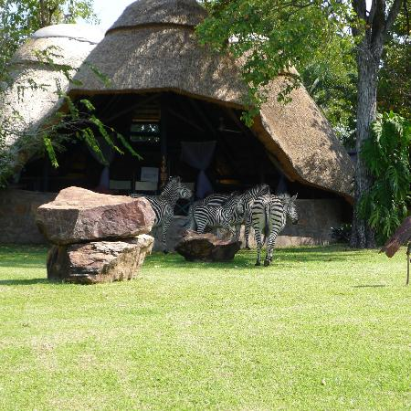 Hornbill Lodge: Zebra grazing in front of our chalet