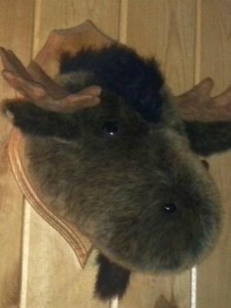 The Sands Resort: Cute moose head