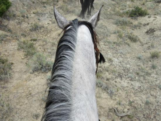 Lonesome Spur Ranch: View from Wrangler ....