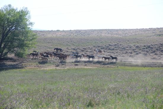 Lonesome Spur Ranch: Horses coming in ....