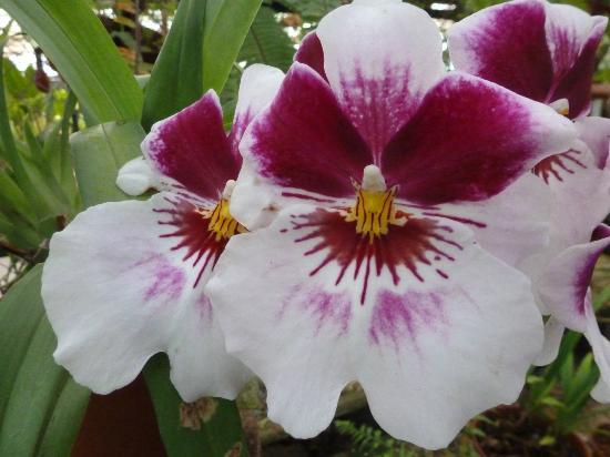 Paisaje picture of jardin botanico lankester cartago for Jardin lankester