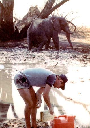 Chobe National Park, Botswana: Sharing Water 1986