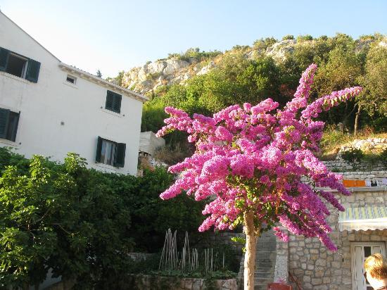 Villa Doris Apartments Stikovica: Территория отеля