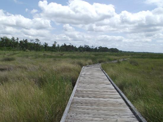 Mandeville, LA: Boardwalk - saw gators