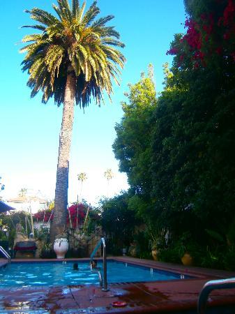 Villa Rosa Inn: piscine et jardin