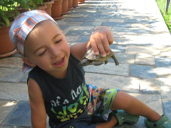 Parkim Ayaz Hotel: my son with the tortoise which roam around the hotel