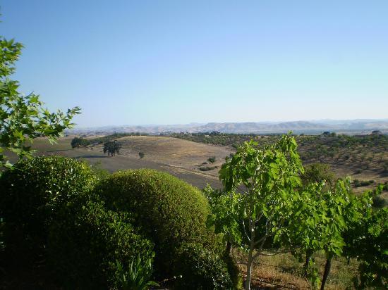 Seven Quails Vineyards Bed & Breakfast: Views!