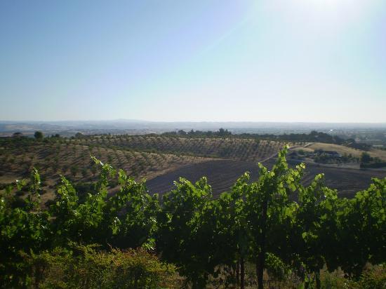 Seven Quails Vineyards Bed & Breakfast: Vineyard views