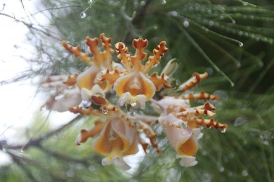 Bungalos Costa del Sol: orchidée