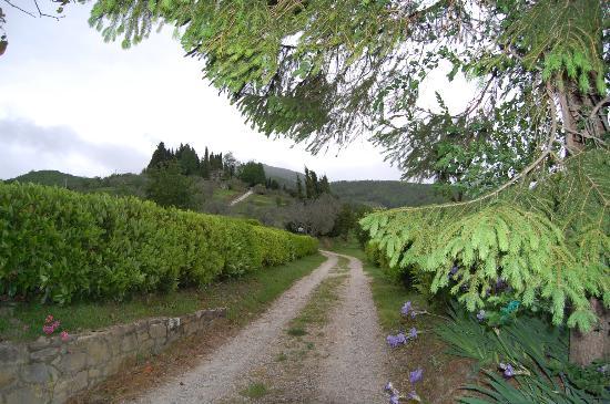 Agriturismo Il Poggio alle Ville: road to the villa