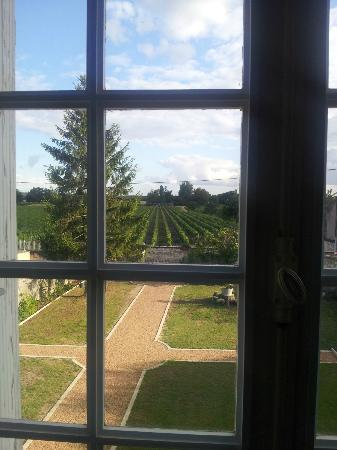 St Georges B&B : The view of the vines from our room