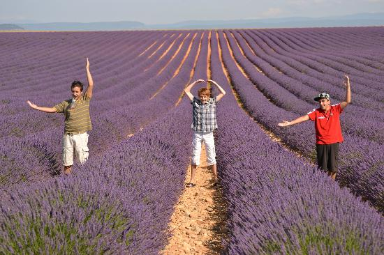 Experience Provence Tours : Valensole plateau