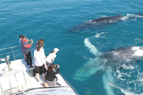 Broome Whale Watching: just chillin