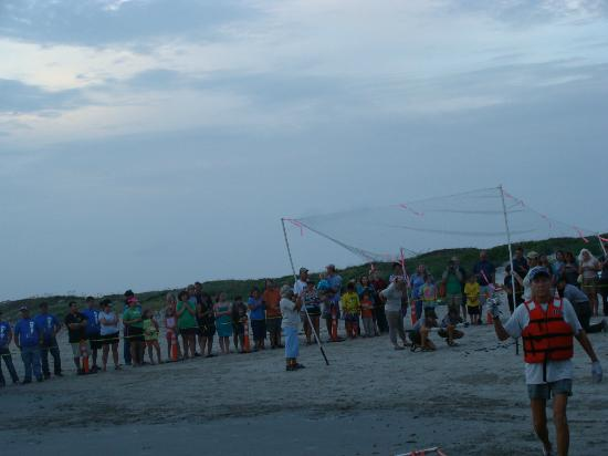 Malaquite Beach : Hatchling release