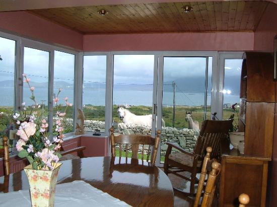 Galway Bed And Breakfast Cheap