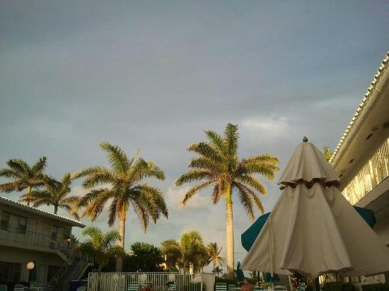 Driftwood Beach Club: The Driftwood Palms